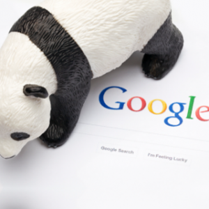 Search Engine Optimisation google panda update
